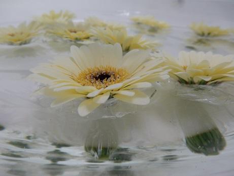 pływające kwiaty